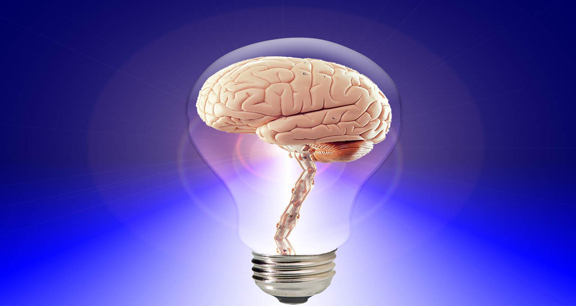 brain-20424(1)